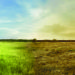 climate change lush field to dry desert